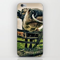 Holy cow its a bull iPhone & iPod Skin