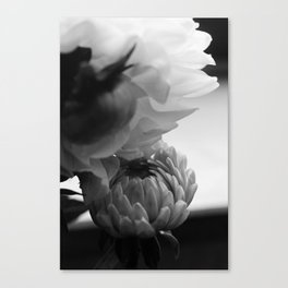 flower close up - black/white - fifteen Canvas Print
