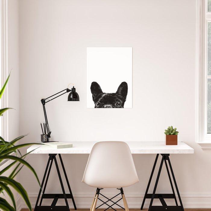 Peeking French Bulldog Poster