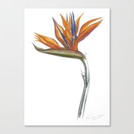 Bird of Paradise 01 Botanical Flower Canvas Print
