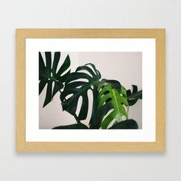 Minimalist Mid Century Scandinavian Style House Plant Mostera Green Leaf Zen Photo Framed Art Print