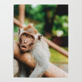 Cute Monkey (Color) Poster