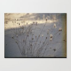 winter dust Canvas Print