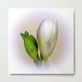 Lilac freesia Metal Print
