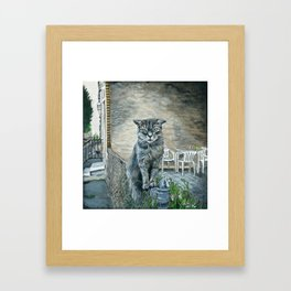 Cat on a Fence Framed Art Print