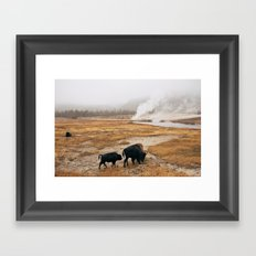 Mother Bison and Calf in Yellowstone National Park Framed Art Print