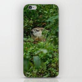 Groggy Groundhog iPhone Skin
