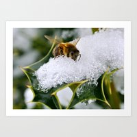 Honey Bee on Holly Art Print