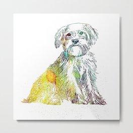Norfolk Terrier Metal Print