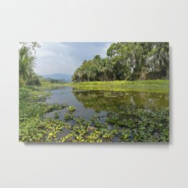 wetland Kametsa Pimpoke Metal Print