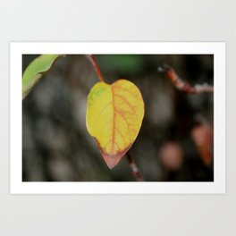 Red and Yelow Leaf Art Print