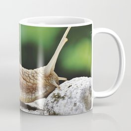 Snail Shell Mollusk Coffee Mug