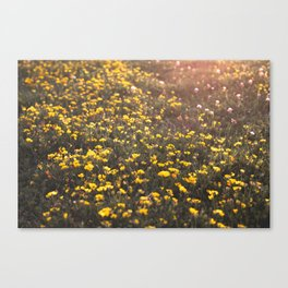 Flowery Field Canvas Print