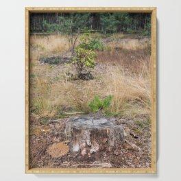Woods trunk in deforestation blast woods Serving Tray