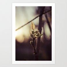 Raspberry sprout Art Print