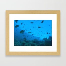 Early morning fish bustling about Framed Art Print