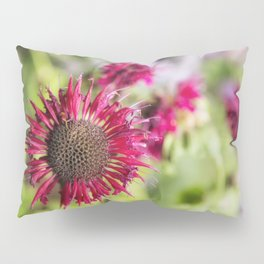 Not Yet Faded Pillow Sham