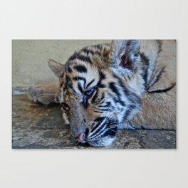 Tiger Baby Canvas Print