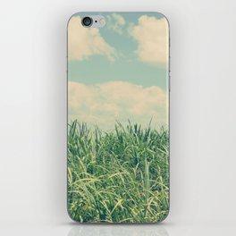sugar cane field iPhone Skin