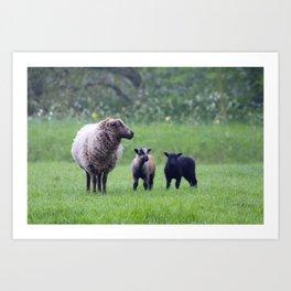 Lamb Love Art Print