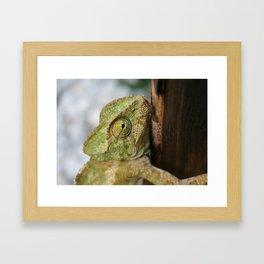 Chameleon Hanging On To A Door Framed Art Print