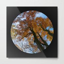 Tree from below Metal Print