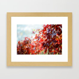 Detail view of colorful vineyard in fall Framed Art Print