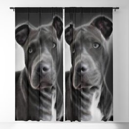 Pit Bull lover, a portrait of a beautiful Blue Nose Pit Bull Blackout Curtain