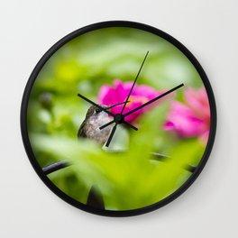 Hummingbird IX Wall Clock