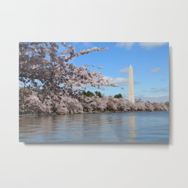 Cherry Blossoms in Washington D.C. Metal Print