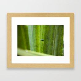 Peekaboo! A gecko in the agave Framed Art Print