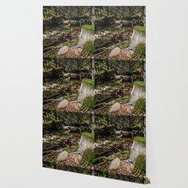 Tree Die Wallpaper