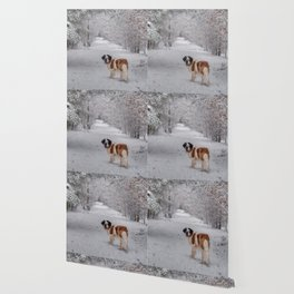 St Bernard dog in the snowy woods Wallpaper