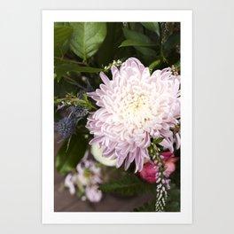 Dahlia in Bloom  |  Fresh Cut Flowers Art Print