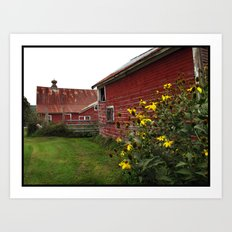 Vermont Barn with Sunflowers Art Print