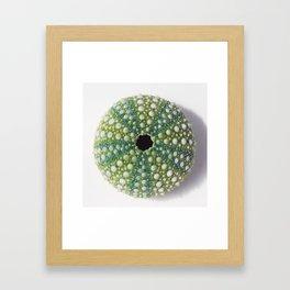 Green Sea urchin shell Framed Art Print