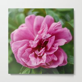 the beauty of a flower Metal Print