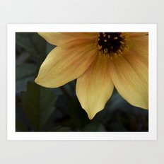sunny bloom. Art Print