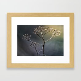 Golden Light Framed Art Print