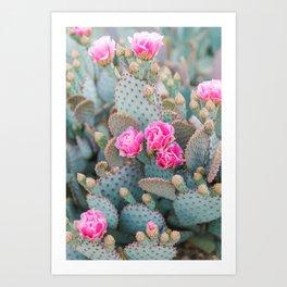 Beavertail Prickly Pear Cactus II Art Print
