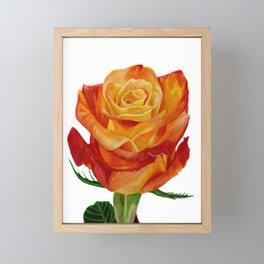 Orange Rose I Drawing Framed Mini Art Print