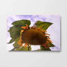 Giant Sunflower Metal Print