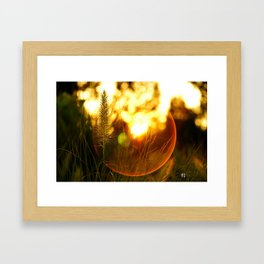 The Beauty of Fall ~ Series I Framed Art Print