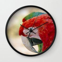 Green Winged Macaw Portrait Wall Clock