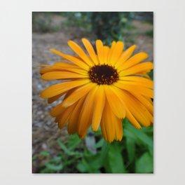 Orange Flower Side Canvas Print