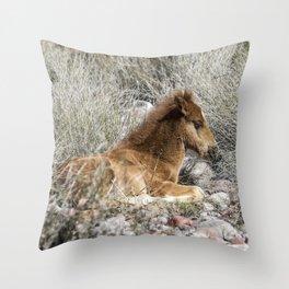 Salt River Colt Taking a Rest Throw Pillow