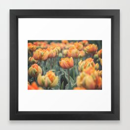 Tulips (Orange Princess) Framed Art Print