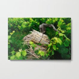 Grape vines Metal Print