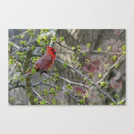 His Majesty the Cardinal Canvas Print
