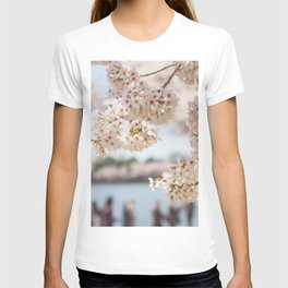 Under the Cherry Blossoms - Washington DC T-shirt